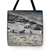 Seals, Seals, And More Seals Tote Bag