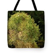 Seasons Of Magic - Hoh Rainforest Olympic National Park Wa Tote Bag