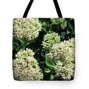 Sedum Autumn Joy - August Tote Bag