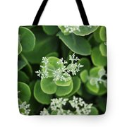 Sedum Pre-bloom Tote Bag
