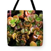 Seeing Succulents Tote Bag