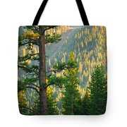 Seeing The Forest Through The Tree Tote Bag