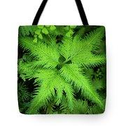 Selaginella Sp. Tote Bag