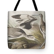 Semipalmated Snipe Or Willet Tote Bag