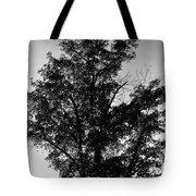 September Tree ... Tote Bag