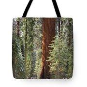 Sequoia General Sherman Tote Bag