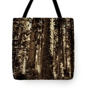 Sequoia Grove Along Crescent Meadow Loop Tote Bag