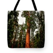 Sequoia In Kings Canyon Tote Bag
