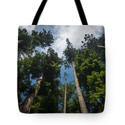 Sequoia Park Redwoods Reaching To The Sky Tote Bag