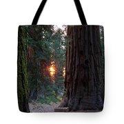 Sequoia Sunset Tote Bag