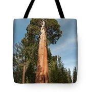 Sequoia Trees Tote Bag