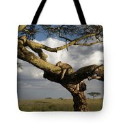 Serengeti Dreams Tote Bag