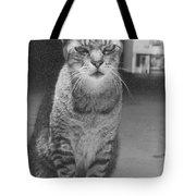 Serious Cat Model Tote Bag