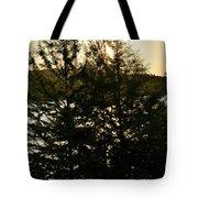 Setting Sun Through A Cypress Tree Tote Bag