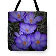 Seven Purple Crocuses Tote Bag