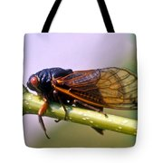 Seventeen Year Cicada Tote Bag