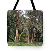 Seward Park Trees Tote Bag