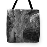 Kingsley Plantation Tree Tote Bag