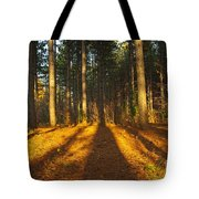 Shadows In Forrest  Tote Bag