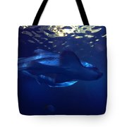 Shark In The Sunlight  Tote Bag