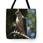 Sharp Shinned Hawk Tote Bag