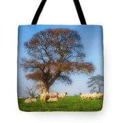 Sheep In Somerset - Impressions Tote Bag