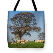 Sheep In Somerset Tote Bag
