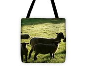 Sheep In The Sunlight Tote Bag