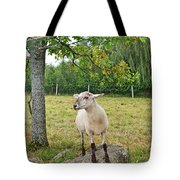Happy Sheep Posing For Her Photo Tote Bag