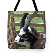 Sheep Three Tote Bag
