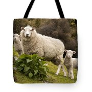 Sheep With Twin Lambs Stony Bay Tote Bag by Colin Monteath