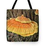 Shelf Fungus - Basidiomycota Tote Bag