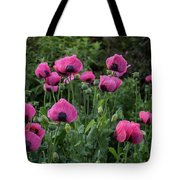 Shell Shaped Poppies Tote Bag