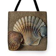 Shells 1 Tote Bag