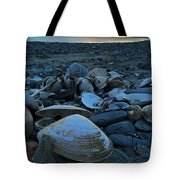 Shells At Sunrise  Tote Bag