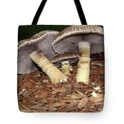Sheltering The Young Tote Bag