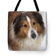 Sheltie In The Snow Tote Bag