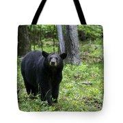 Shenandoah Black Bear Tote Bag