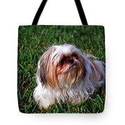 Shitzu Dog Tote Bag