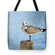 Shorebird  Tote Bag