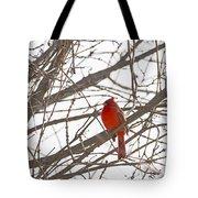 Showing His Colours - Northern Cardinal - Cardinalis Cardinalis Tote Bag