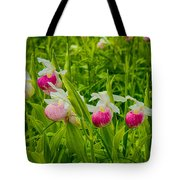 Showy Lady's Slipper Orchids Tote Bag