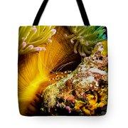 Shrimp Vogue Tote Bag