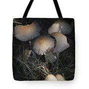 Shrooms 1 Tote Bag