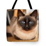 Siamese Cat Tote Bag