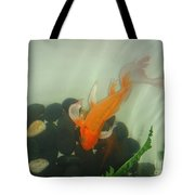 Siamese Fighting Fish 1 Tote Bag