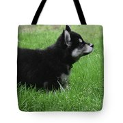 Side View Of A Two Month Old Alusky Pup Tote Bag