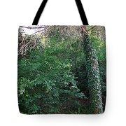 Siena-48 Tote Bag