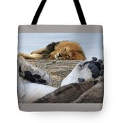 Siesta Time For Lions In Africa Tote Bag