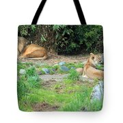 Siesta Time Tote Bag by Suzanne Gaff
